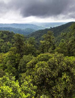 Choco Rainforest, Ecuador. This area of jungle is the Mashpi Cloud Forest in the Pichincha Province of Ecuador, South America-3