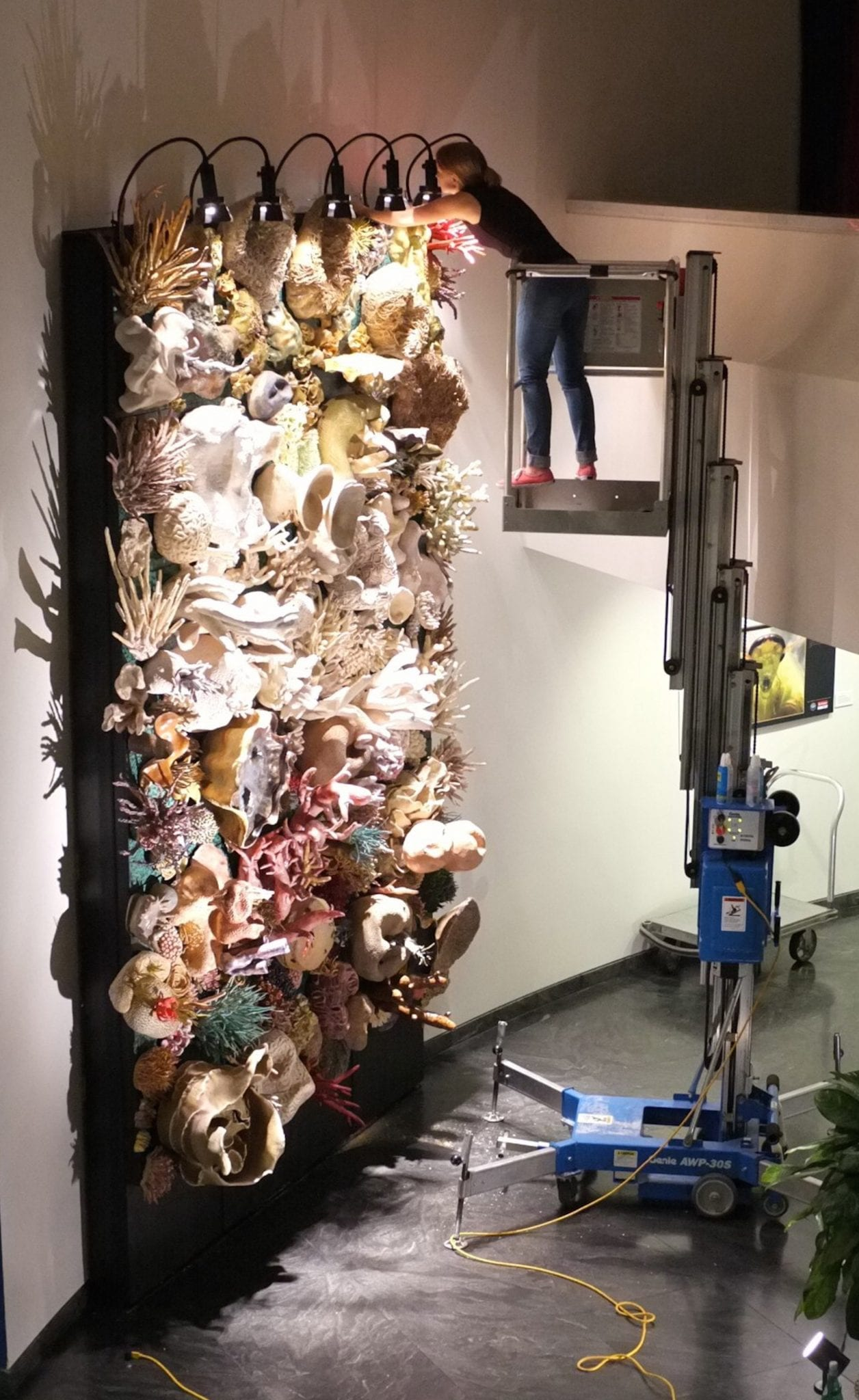 Installing in AAAS Gallery  (© Thad Vickery)