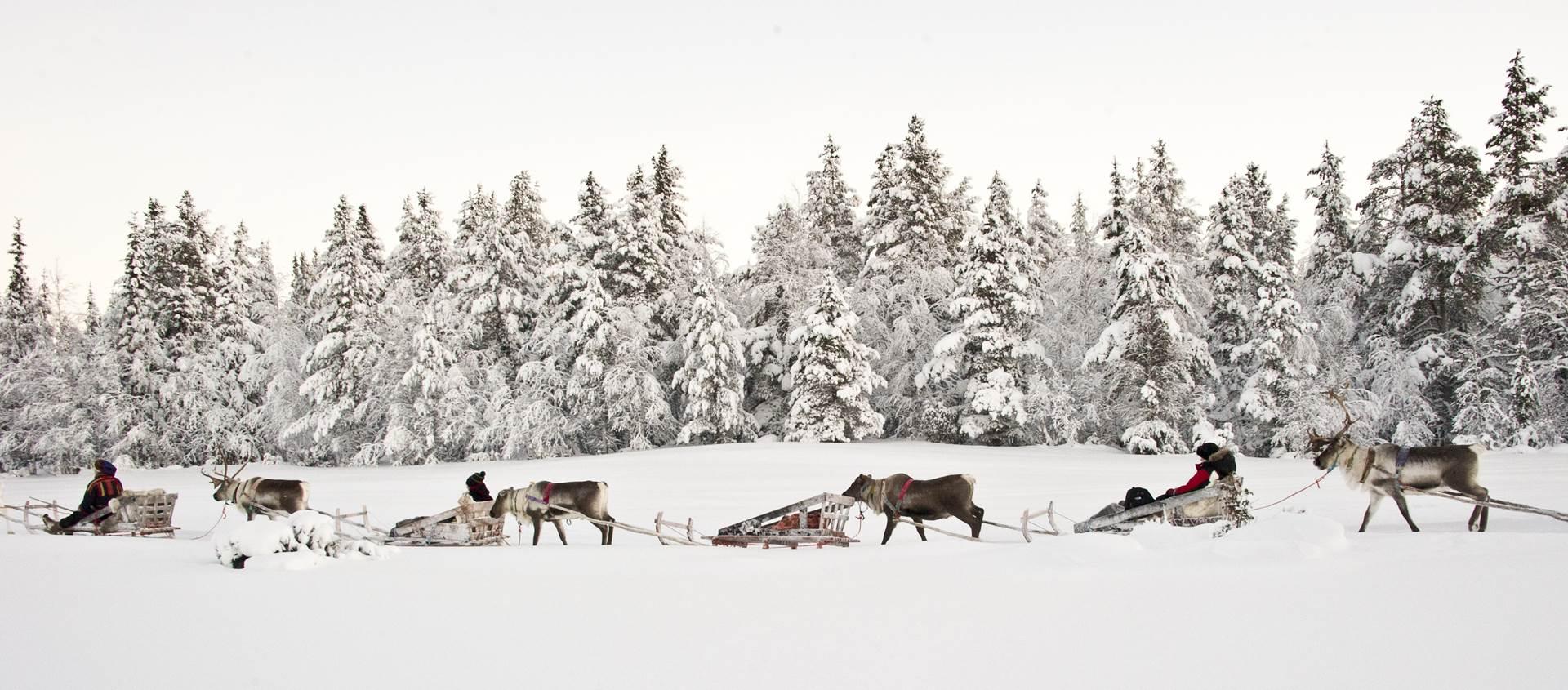 Reindeer safari Kakslauttanen 2 (Copy)