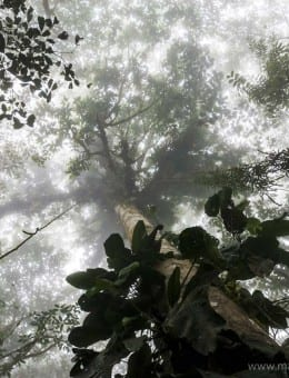 Misty Jungle, Mashpi Cloud Forest in the Choco Rainforest, Ecuador, South America