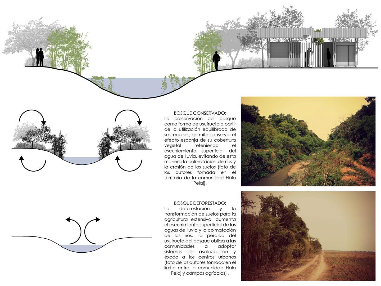 06 Cosechando estructuras_XhARA_La funcion del bosque (Copy)