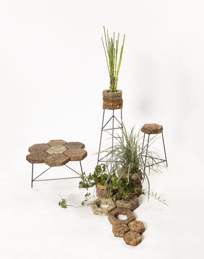 Ecosistema interior - Lucía Bellani