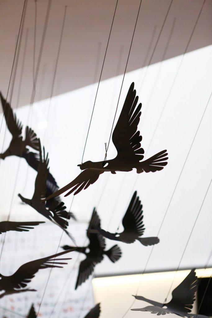 049 flying birds (Copy)