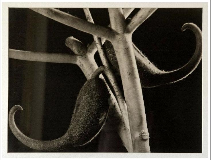 Anatole Saderman, Espuela del Diablo, 1937