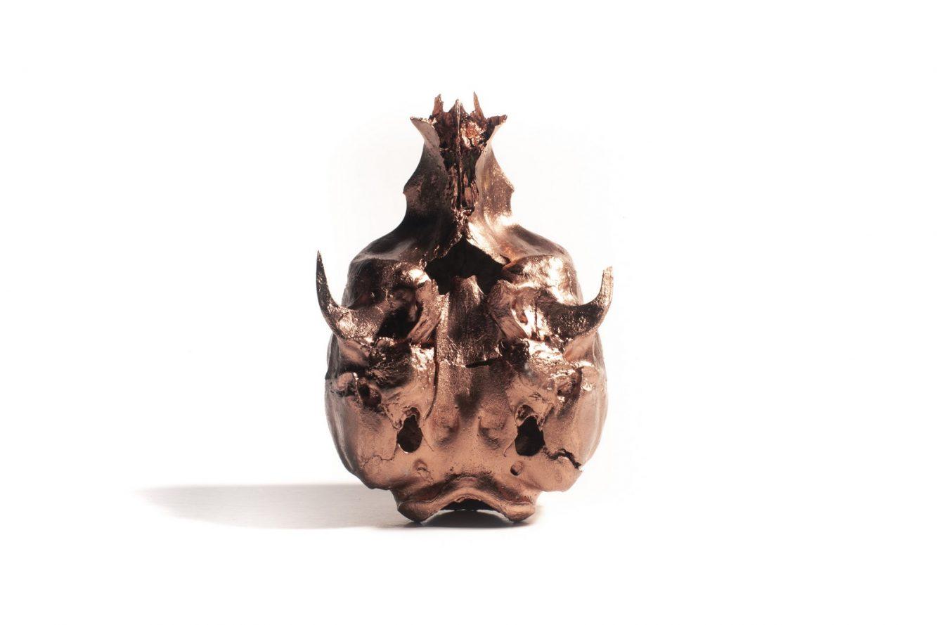 Electrólisis - Cráneo lobo marino