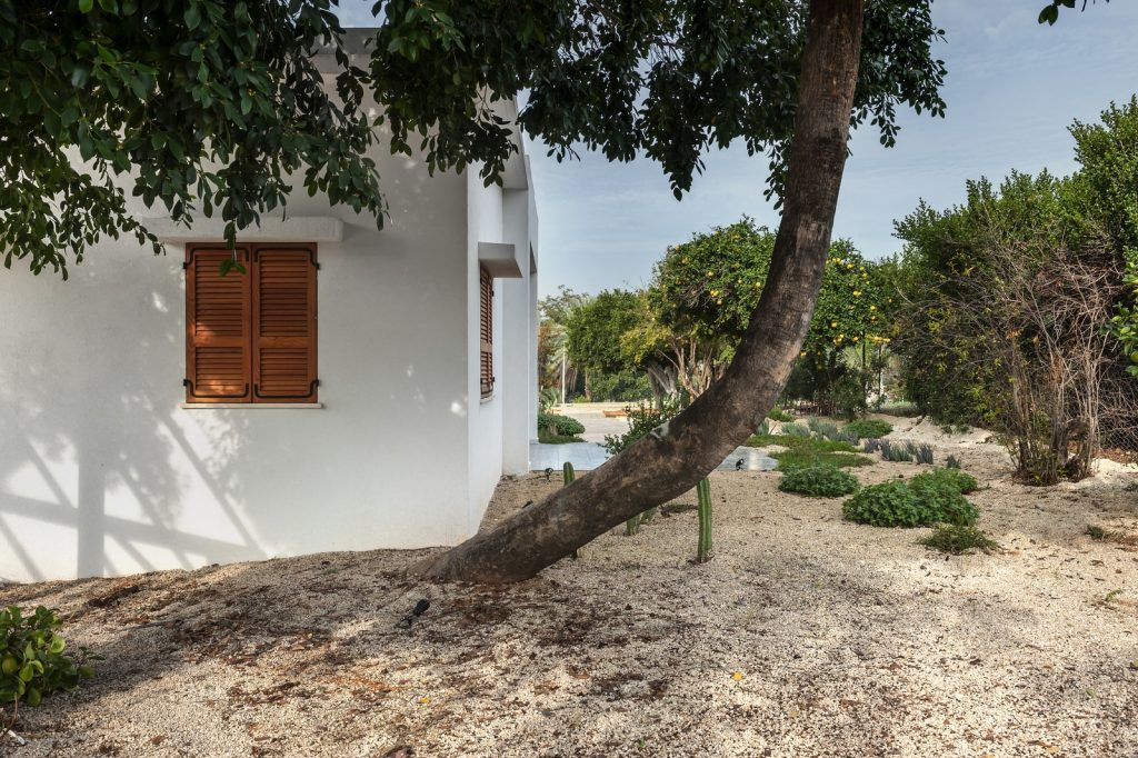 med.cacti house (3) (Copiar)
